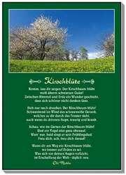 Postkarten: Kirschblüte, 12 Stück